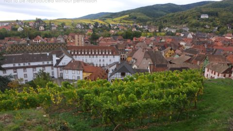 025A1580 Vineyards above Ribeauville, Alsace, France; copyright Christopher P Baker