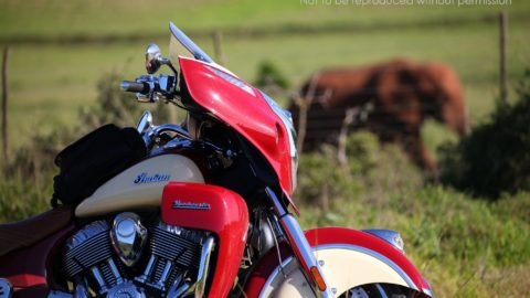 IMG_0745 2000px 2015 Indian Roadmaster at Addo Elephant National Park, South Africa; copyright Christopher P Baker